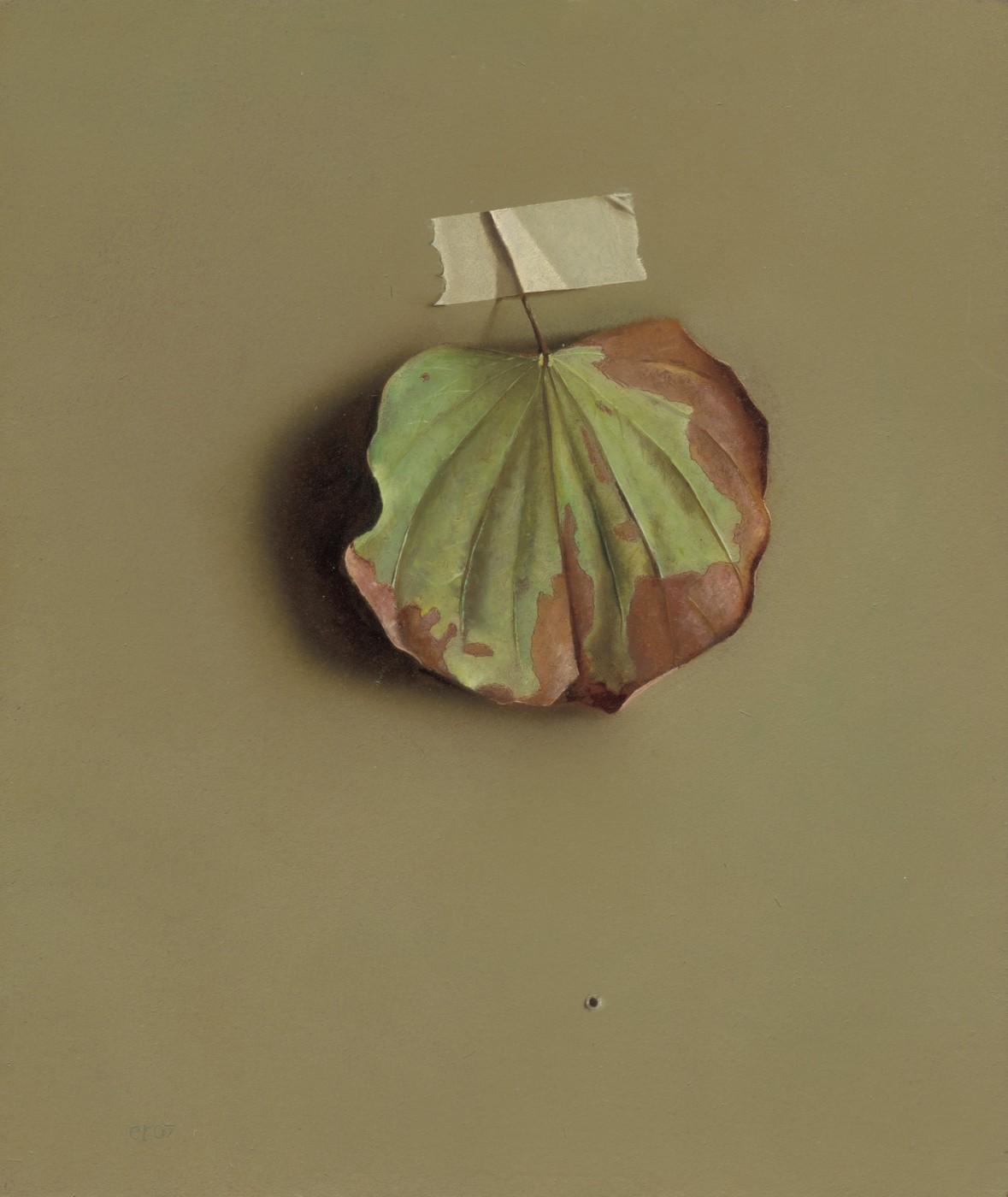 Bauhinia Leaf 1