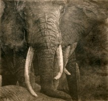 Elephants artwork