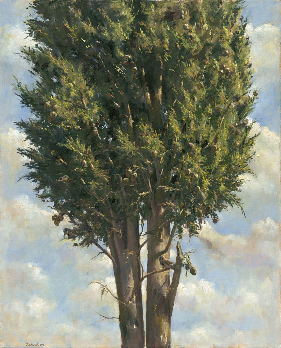 Cypress with a bird